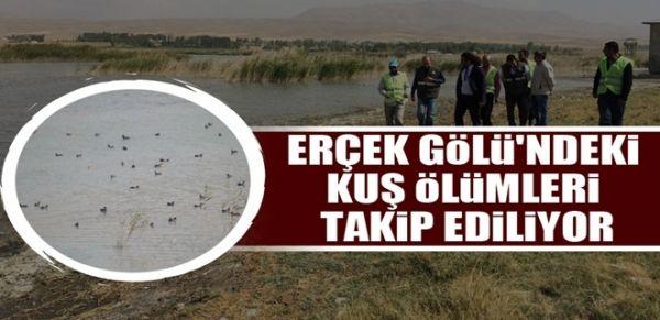 Erçek Gölü'ndeki kuş ölümleri takip ediliyor