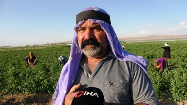 Kuraklık sebze üreticilerini vurdu