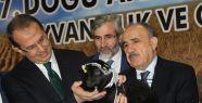 7. Doğu Anadolu Tarım, Hayvancılık ve...