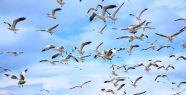 Yabani kuşlar için doğaya yem bıraktılar...