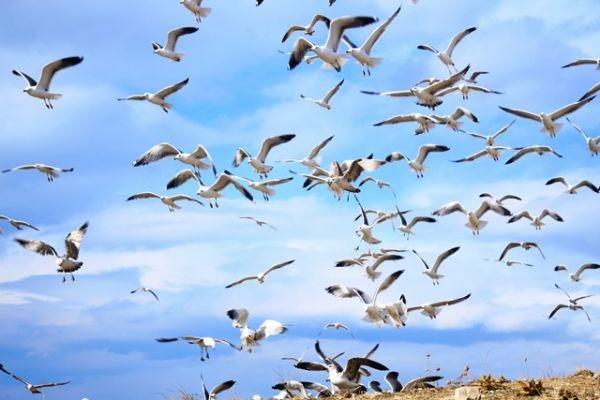 Yabani kuşlar için doğaya yem bıraktılar